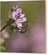 Bee On Flower Blooming Wood Print