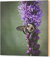 Bee On Gayfeather Squared 1 Wood Print