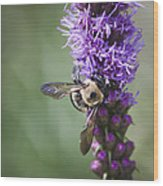 Bee On Gayfeather Squared 2 Wood Print