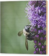 Bee On Gayfeather Wood Print