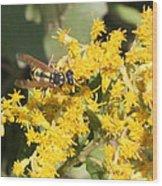 Bee On Goldenrod Wood Print