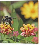 Bee On Lantana Flower Wood Print
