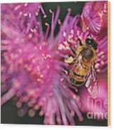 Bee On Lollypop Blossom Wood Print