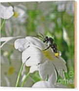 Bee On Primrose Wood Print