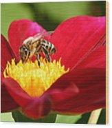 Bee On Red Dahlia Wood Print