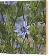 Bee On Romaine Flower Wood Print