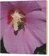 Bee On Rose Of Sharon Wood Print