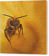 Bee On Squash Flower Wood Print