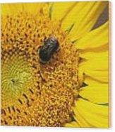 Bee On Sunflower Wood Print