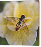 Bee On Yellow Flower Wood Print