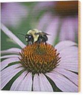 Bee Resting Squared Wood Print