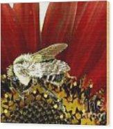 Bee Tip Toes Wood Print