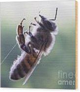 Bee Web Wood Print