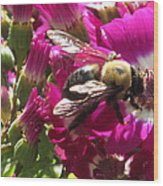 Bee With Cinearia Wood Print