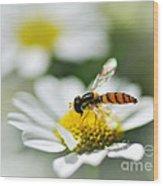 Bee With Rainbow Wings Wood Print