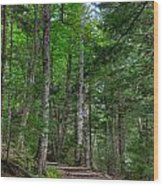 Beech Mountain Trail Acadia Wood Print