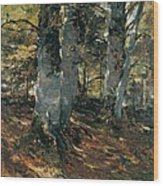 Beechwoods At Polling Bavaria Wood Print