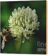 Beeflower2 Wood Print