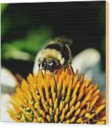 Beeing Healthy With Echinacea Pow Wow Wood Print