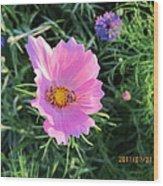 Bees Favorite Flower Two Wood Print