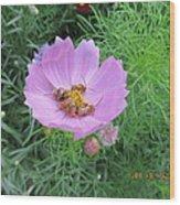 Bees Feeding Wood Print