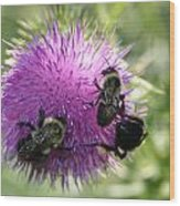 Bees On Thistle Wood Print