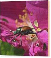 Beetle Wood Print