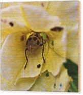Beetle In Yellow Flower Wood Print