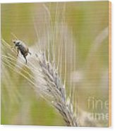 Beetle On The Wheat Wood Print