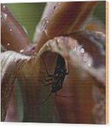 Beetlejuice Wood Print
