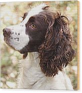 Before The Hunt - English Springer Spaniel Wood Print