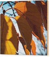 Before The Leaves Fall Wood Print