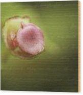 Begonia Bud Wood Print