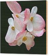 Begonia Flower Gems Wood Print