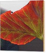 Begonia Leaf Wood Print