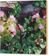 Begonias By Stone Wall Wood Print