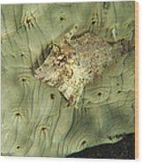 Beige Juvenile Filefish Hiding Wood Print