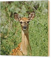 Being Watched Wood Print by Ernie Echols