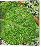 Bejewelled By Rain  Wood Print