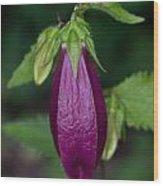 Bell Flower Bud 1 Wood Print