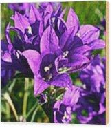 Bell Flowers Wood Print