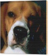 Bella The Beagle Wood Print