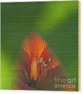 Belladonna Lily Closeup Wood Print