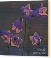 Bellflower Wood Print