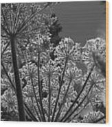 Below Beauty Wood Print
