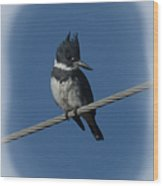 Belted Kingfisher 2 Wood Print