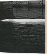 Beluga Impressions 1 Wood Print