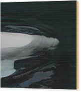 Beluga Impressions 3 Wood Print