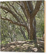 Bench And Tree In Cambria II Wood Print