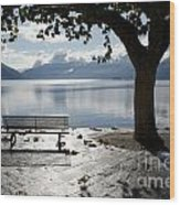 Bench And Tree On The Lakefront Wood Print